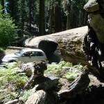 usa sequoia2